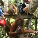 Indonésie, Palmier à huile, documentaire, déforestation, tourbières