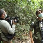 Indonésie, déforestation, désastre écologique, biocarburant